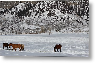 Metal Print featuring the photograph Harmony by Fiona Kennard