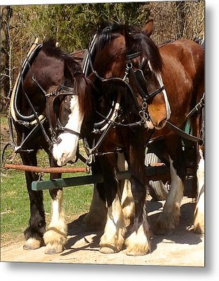 Harness Partners Metal Print by Jeff Gater
