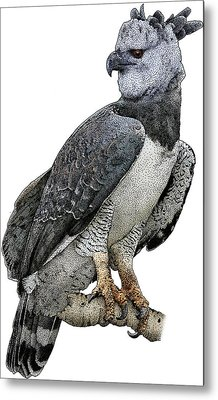 Harpy Eagle, Harpia Harpyja Metal Print by Roger Hall