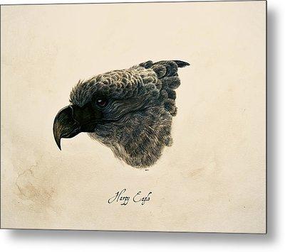 Harpy Eagle Metal Print by Rachel Root