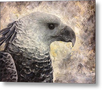 Harpy Eagle Study In Acrylic Metal Print by K Simmons Luna