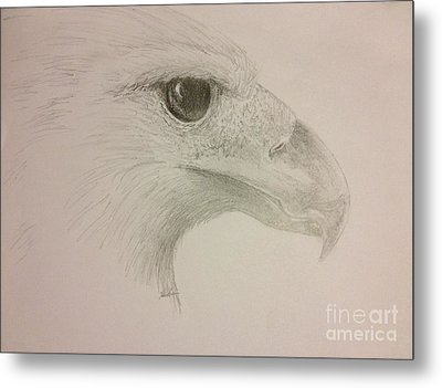 Harpy Eagle Study Metal Print by K Simmons Luna