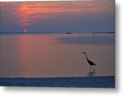 Metal Print featuring the photograph Harry The Heron Fishing On Santa Rosa Sound At Sunrise by Jeff at JSJ Photography