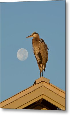 Metal Print featuring the photograph Harry The Heron Ponders A Trip To The Full Moon by Jeff at JSJ Photography