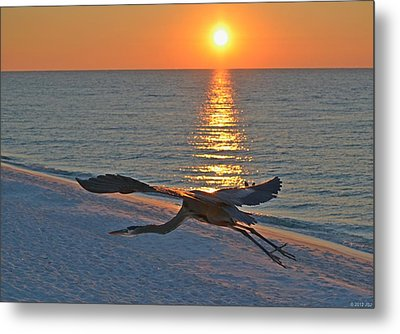 Metal Print featuring the photograph Harry The Heron Takes Flight To Reposition His Guard Over Navarre Beach At Sunrise by Jeff at JSJ Photography