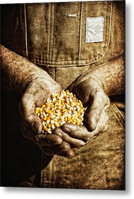Harvest In His Hands Metal Print by Lincoln Rogers