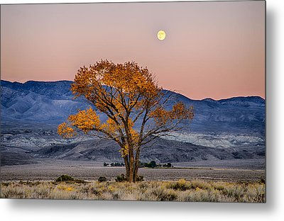 Harvest Moon Metal Print by Cat Connor