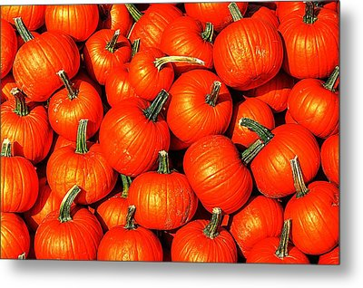 Harvest Party Metal Print by Benjamin Yeager