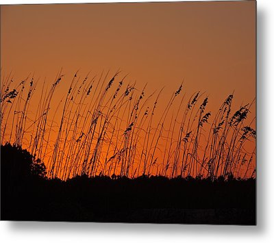 Harvest Sky And Sea Oats Metal Print by Eve Spring