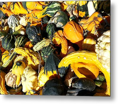 Metal Print featuring the photograph Harvest Squash by Caryl J Bohn
