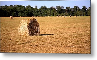 Metal Print featuring the photograph Harvest Time by Gordon Elwell