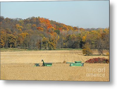 Harvesting Iowa Corn  Metal Print