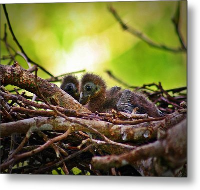 Metal Print featuring the photograph Hoatzin Hatchlings In The Amazon by Henry Kowalski