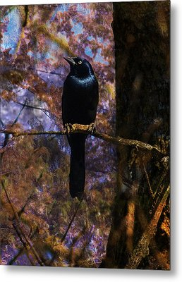 Metal Print featuring the digital art Haunting Grackle by J Larry Walker