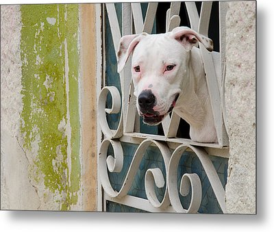 Havana Watchdog Metal Print