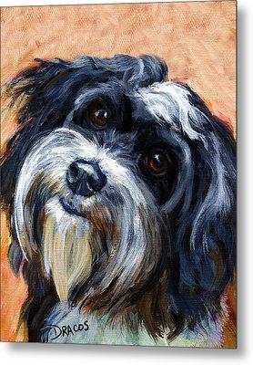 Havanese Dog Portrait Metal Print by Dottie Dracos