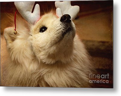 Have I Been A Good Doggie? Metal Print by Lois Bryan