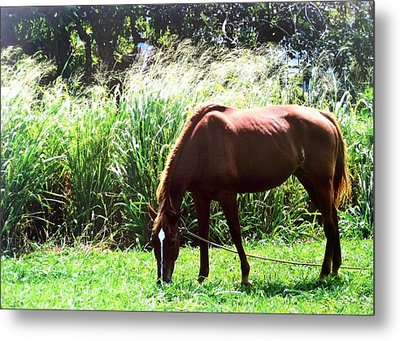 Having Lunch Metal Print