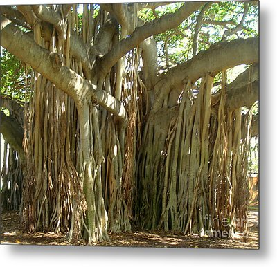 Hawaii Banyan Tree Metal Print