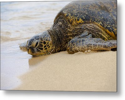 Hawaiian Green Sea Turtle 3 Metal Print by Brian Harig