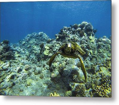 Hawaiian Green Sea Turtle Metal Print by Brad Scott