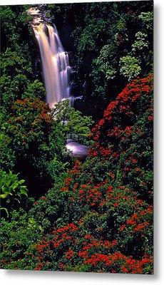 Hawaiian Waterfall With Tulip Trees Metal Print