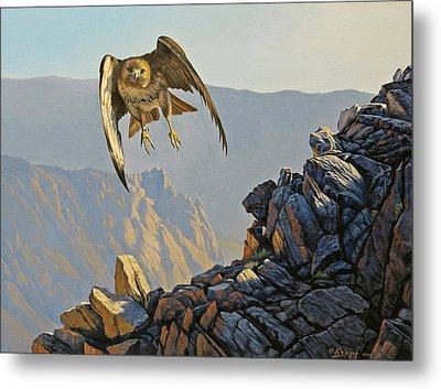 Hawk Above Beartooth Pass Metal Print by Paul Krapf