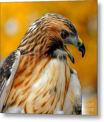 Hawk Hunt Metal Print