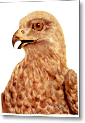 Metal Print featuring the digital art Hawk by Terry Frederick