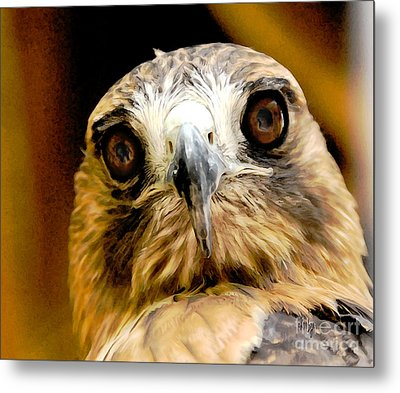 Hawkeye Metal Print by Lois Bryan