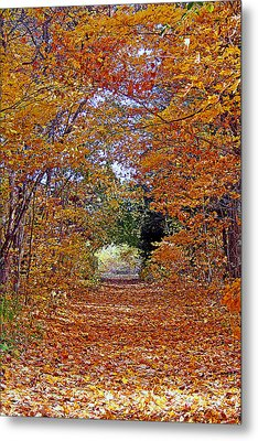 Hawthorn Hollow Metal Print