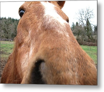 Hay? Metal Print by Steve Battle
