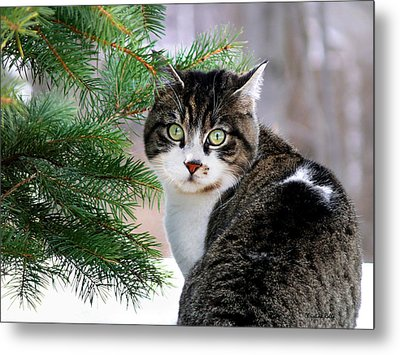 Hazel Eyes And Pine Metal Print by Christina Rollo