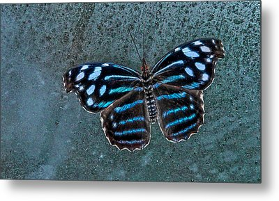 Hdr Butterfly Metal Print
