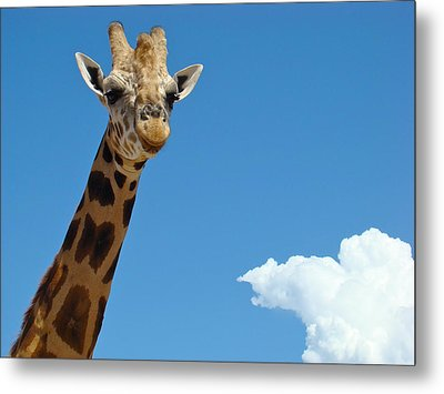 Metal Print featuring the photograph Head In The Clouds by Paul Foutz