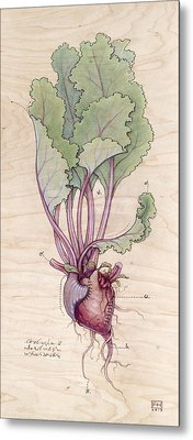 Heart Beet Metal Print by Fay Helfer