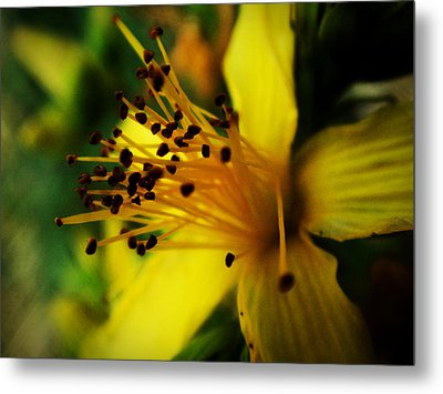 Metal Print featuring the photograph Heart Of A Flower by Zinvolle Art