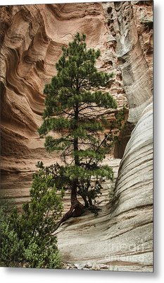 Heart Of The Canyon Metal Print by Terry Rowe