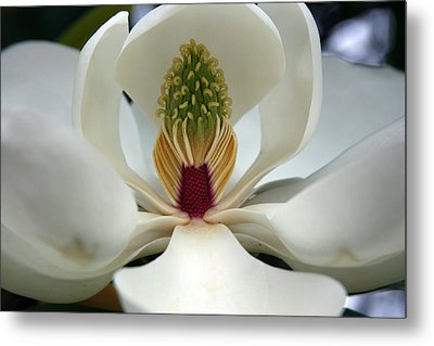 Metal Print featuring the photograph Heart Of The Magnolia by Andy Lawless