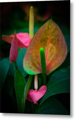 Hearts Of Joy Metal Print by Karen Wiles