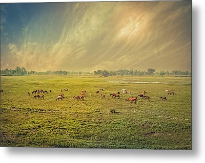 Heat N Dust - Indian Countryside Metal Print
