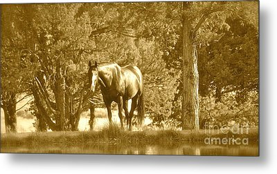 Metal Print featuring the photograph Heaven On Earth by Barbara Dudley
