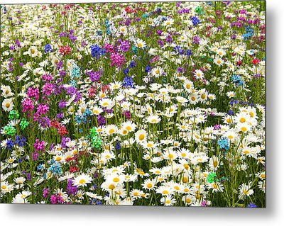 Metal Print featuring the photograph Heavenly Flower Bed by Larry Landolfi