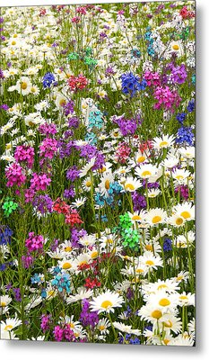 Metal Print featuring the photograph Heavenly Flowers 2 by Larry Landolfi