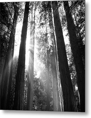Heavenly Forest Metal Print