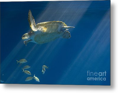 Heavenly Turtle Metal Print