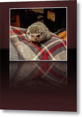 Hedgehog 5 Metal Print