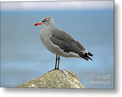 Heermann's Gull In Profile Metal Print