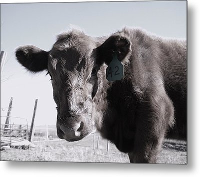 Heifer Metal Print by J L Zarek