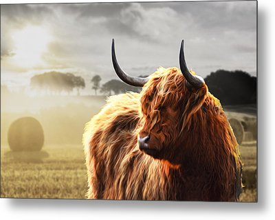 Heilan Coo On Fire Metal Print